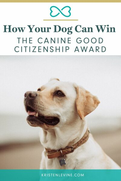 Here is how your dog can win the Canine Good Citizenship award