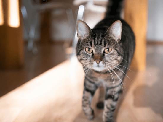 Keep your indoor cat entertained with these enrichment activities!