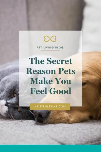 Do your pets make you feel good? Here is why!