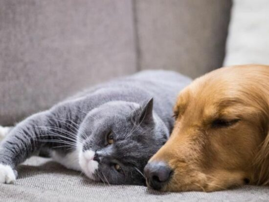 Do your pets make you feel good? Here is the reason why!