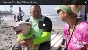5 Reasons your dog would love surfing