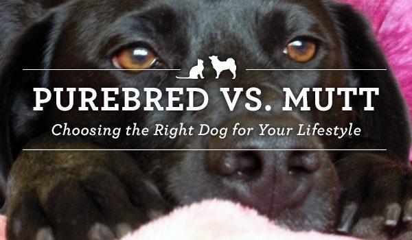 35 Purebred vs Mutt