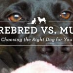 Purebred vs. Mutt, Choosing the Right Dog for Your Lifestyle
