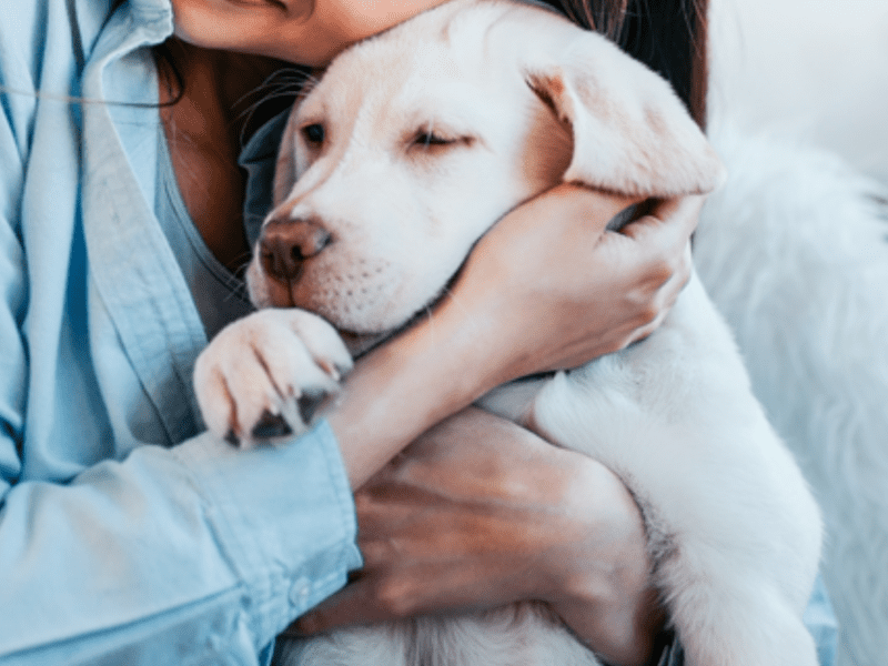 Your dog can help heal your broken heart