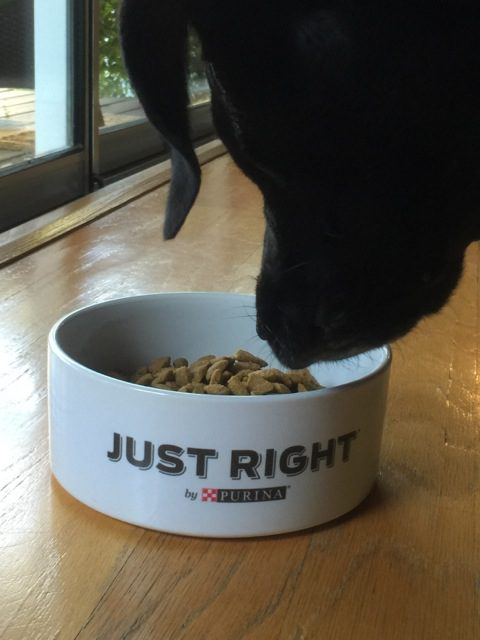 Chilly with Just Right by Purina Pet Food
