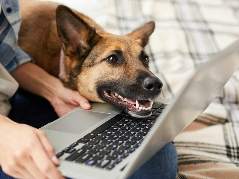 Make the most of taking your dog to work