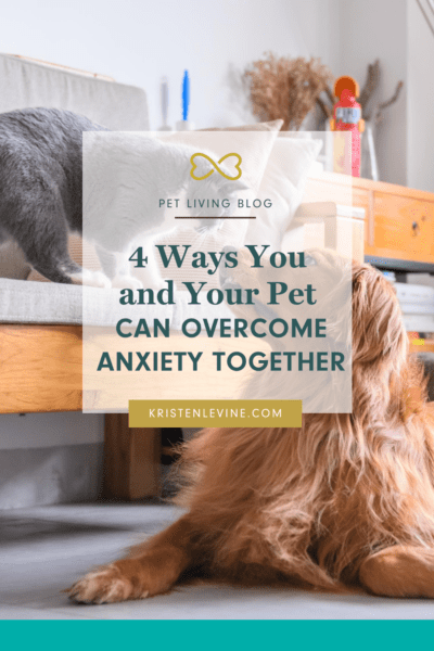 Pet anxiety is a heartbreaking issue. Here is how you and your pet can overcome it together.