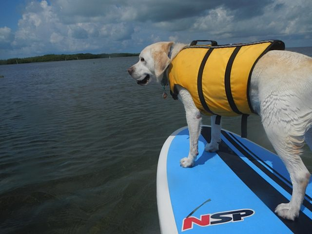 Bonding with your dog with water sports
