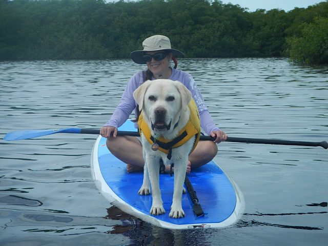 Bonding with your dog through water sports