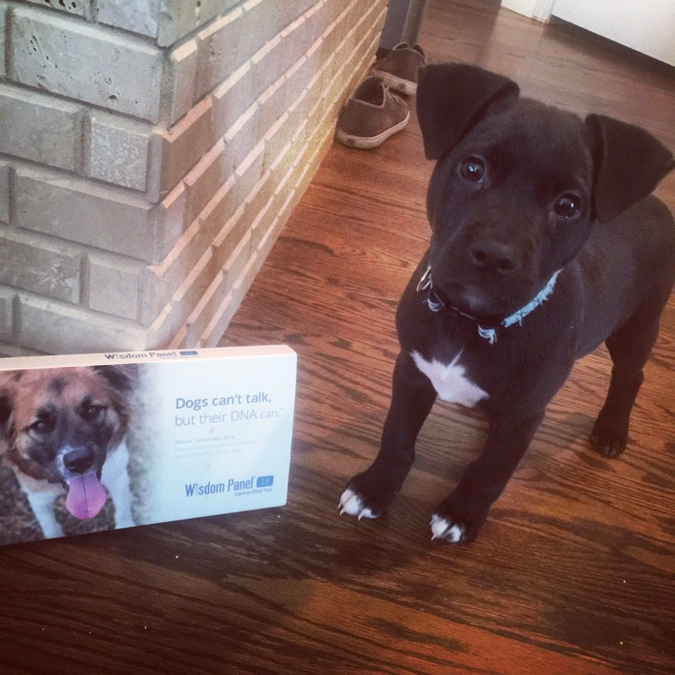 WisdomPanel Doggie DNA Test for Cola