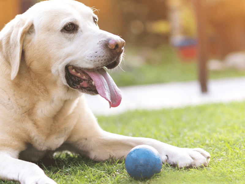 Help your dog enjoy his golden years with these brain boosting tricks!