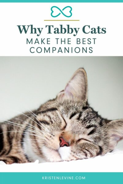 Tabby cats make the best companions. Here's why!