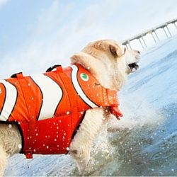 Fun Fish Dog life jacket