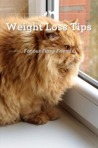 Pet weight loss tips