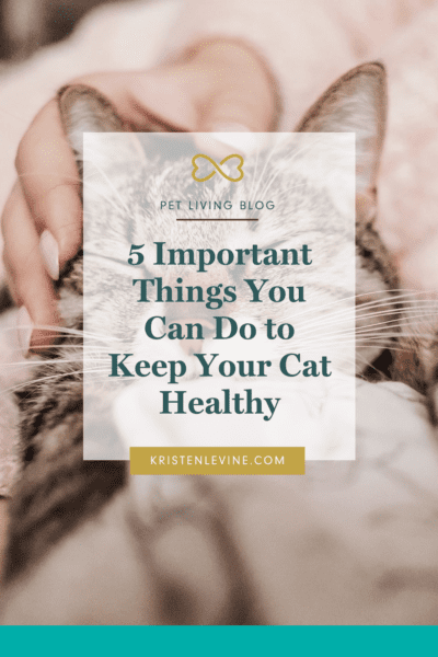 Cat parents can do these 5 important things to keep their kitties healthy!