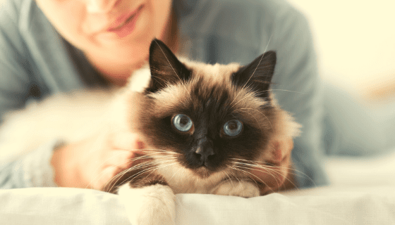 Tips on checking your cat's vitals