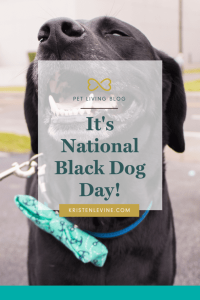 Celebrate National Black Dog Day the right way!