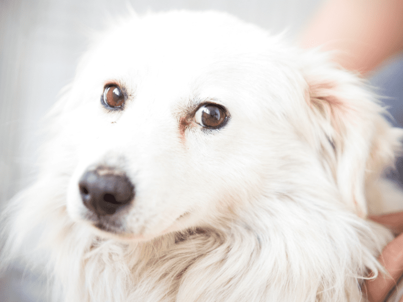 Discover the causes and the solutions to your dog's anxiety.