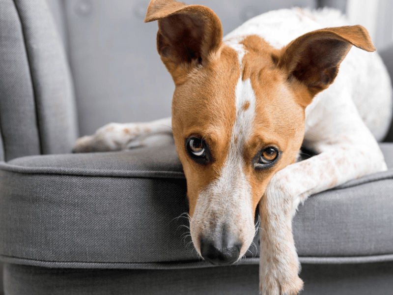 Is your pet anxious? These common triggers could be why.
