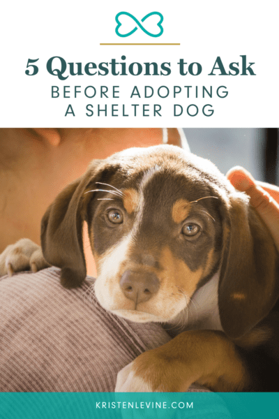 Before adopting a shelter dog, ask these 5 questions.