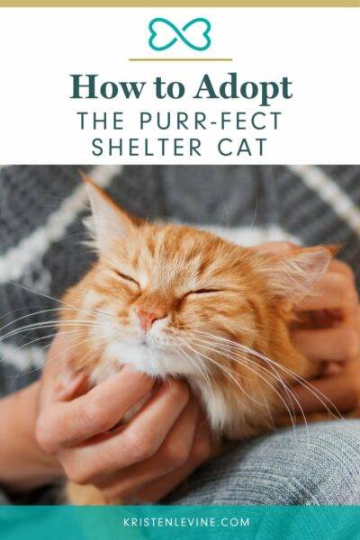 Adopt the purr-fect shelter cat with these tips