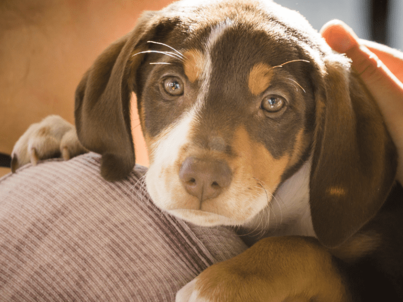 Questions to ask before adopting a shelter dog