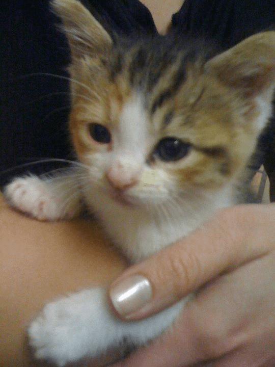 Dylan - Animal Adoption Stories