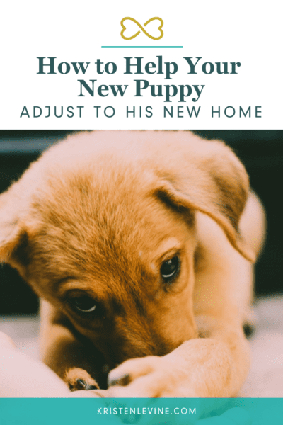 New puppy? Here's how to help him adjust to his new home.