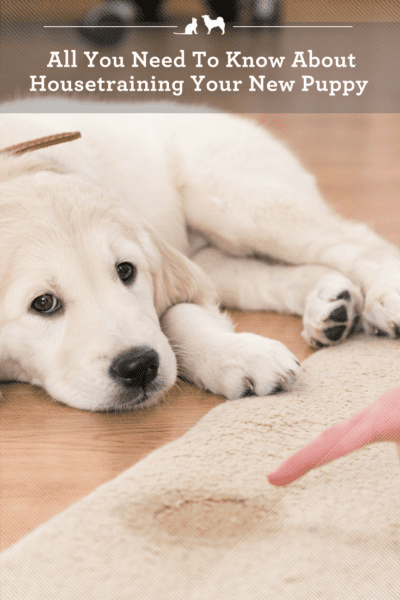Housetraining Your New Puppy