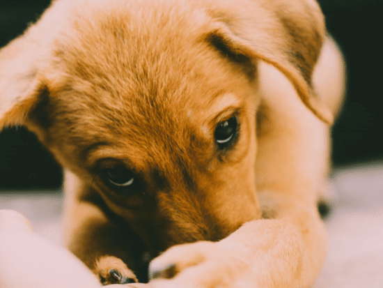 How you can help your new puppy adjust to his new home