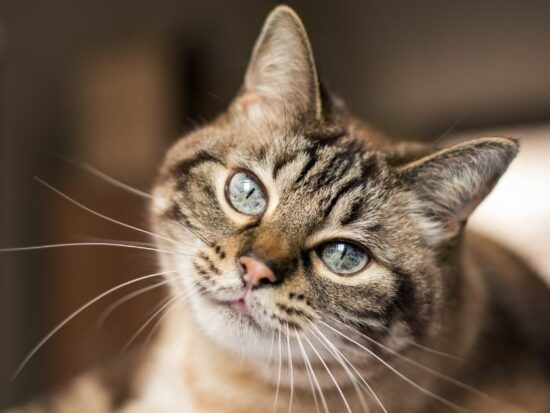 New cat? It's time to spay or neuter!