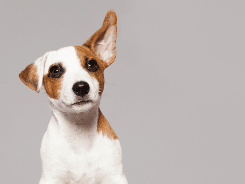 New puppy? Learn how to make them more social the right way!