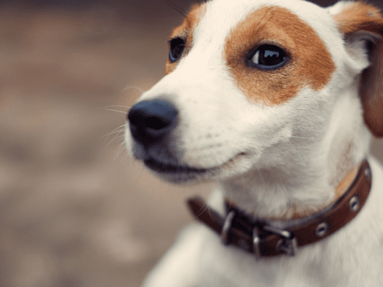 If your dog suffers from noise and storm anxiety, these six things can help!