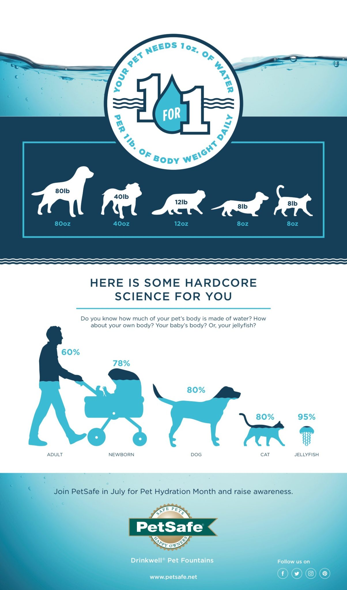 Pet hydration month infographic
