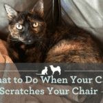 What to Do When Your Cat Scratches Your Chair