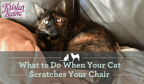 What to Do When Your Cat Scratches Your Furniture