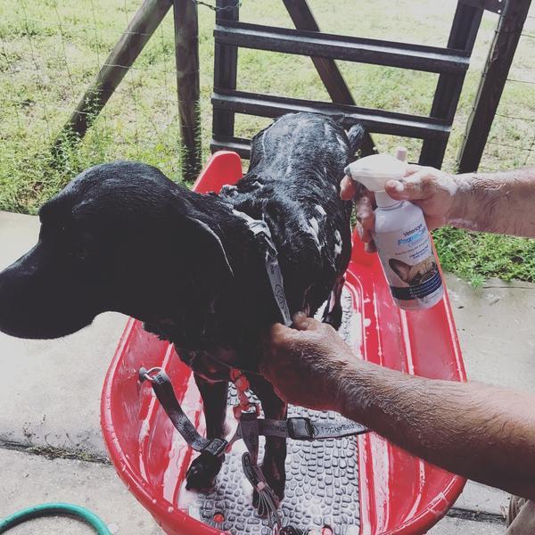 Chilly bath time Foam Care shampoo