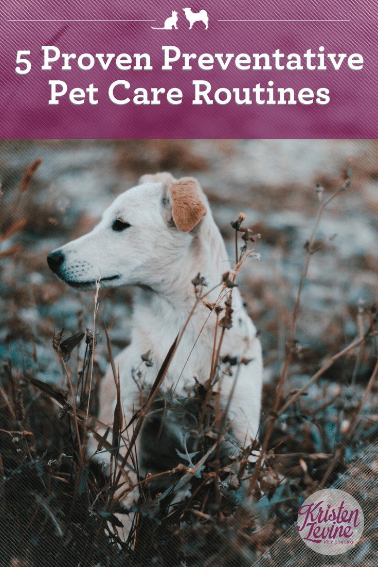 5 Proven Preventative Pet Care Routines