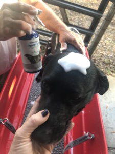 It's Chilly's bath time with Vetericyn FoamCare shampoo!