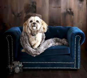 Super bougie dog bed from Pottery Barn. Love it!