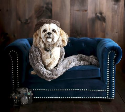 Bougie Pottery Barn Dog Bed