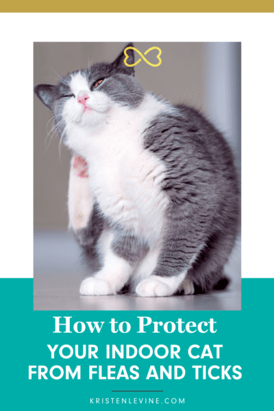 Indoor cats need flea and tick prevention, too!