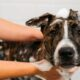 Bathe your dog with these simple solutions!