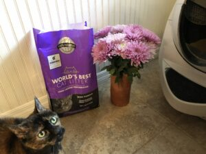 Turdie loves her new lavender kitty litter as much as I do!