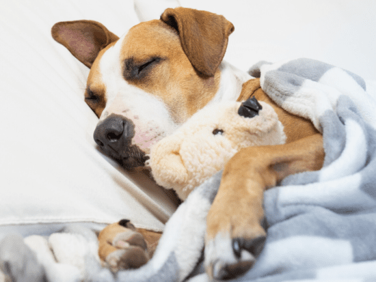 Is your dog's anxious behavior keeping him (and you) up at night? Here are five calming routines for a good night's rest.