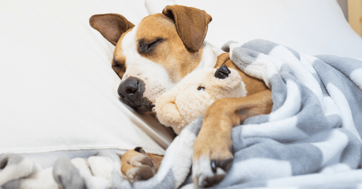 5 Bedtime Routines To Calm An Anxious Dog Kristen Levine Pet Living