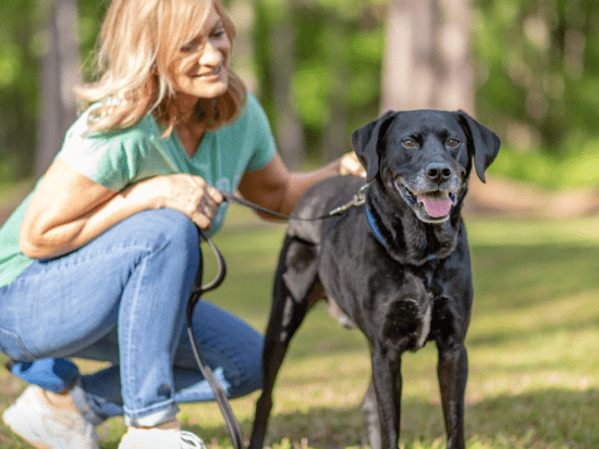 Pet anxiety is a heartbreaking issue. I have solutions for pet parents.