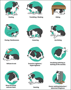 Signs of noise aversion in dogs.