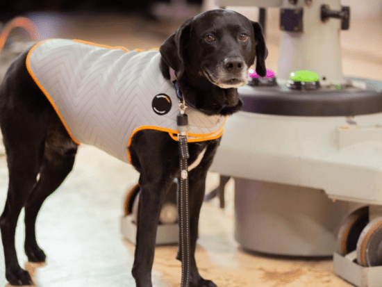Is your dog anxious at loud noises? This drug-free solution can help!