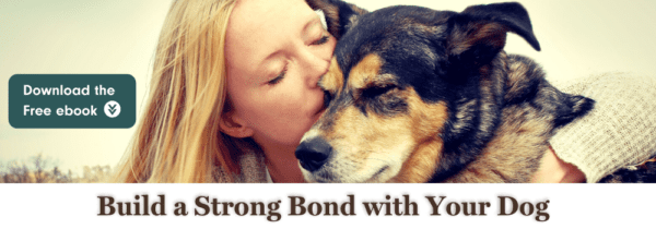 Bond with your dog
